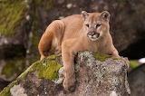 #Puma Argentina
