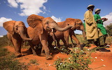 Orphans ~ Kenya