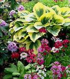 flowers on fb