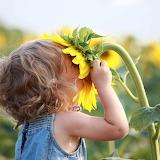 Fotolia girl_smelling_sunflower