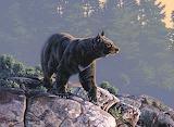 WM Bear 2