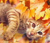 Ginger cat and autumn leaves