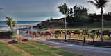 Camels, Cable Beach, Australia - Nikon D90