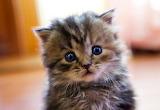 Baby Kitten...