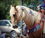 Palomino on parade