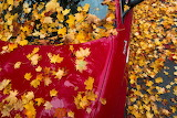autumn leaves on red car