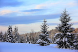 Seasons Winter Forests 461835