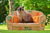 Cat's Daybed