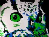 Owl.............................................x