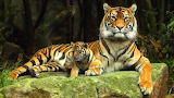 Tigresa y cachorro