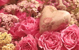 Roses-flowers-pink-color-heart-romantic