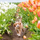 🌷Spring is in the air...