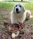 Dog with fawn