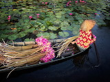 Water-lily-harvest-Mekong Delta
