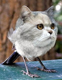 Kitty-Bird