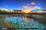 Sunset Wetlands Florida