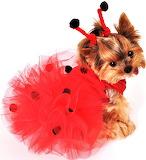 #Lady Bug Tutu Puppy
