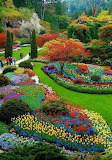 Flower garden rainbow color