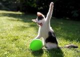 Killing the Balloon