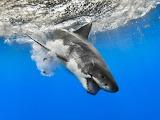 Wild animals-shark