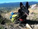 Trail Dog Gerta