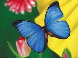 ☺ Butterfly...