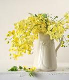 Yellow cassias