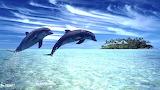 150 Dofí - Dolphin