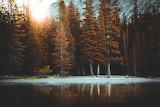 Winter-sun-thru-forrest