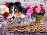dog hidding behind basket of flowers