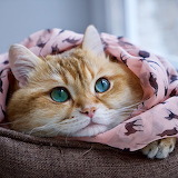 Hosico the cat from Russia