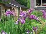 Flowers 6-12-05