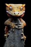 "Animals facebook ""Igor Siwanoswicz"" ""Crested gecko"""