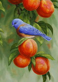 Blue bird sitting on a peach tree