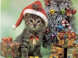 Santa-cat-christmas-wallpaper