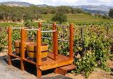 Harvest in The Vineyard - Photo from Piqsels id-fxjxu
