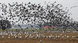 Birds-germany