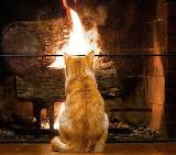 Kitty Warming