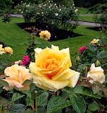 Rose garden-Stanley park-Vancouver