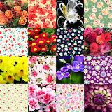 #Flower Collage 5