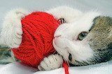 kitten-playing-with-red-ball-of-yarn-sami-sarkis