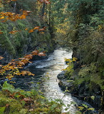 """Waterscape tumblr dogstardreams """"Stamp River in Autumn"""" """"Rick Le"""
