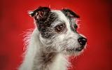 ☺ Cute dog...
