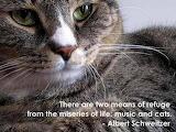 Albert Schweitzer on cats