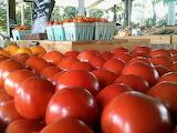 Roadside Stand Tomato Heaven