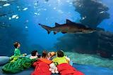 Sleep a night with sharks-Genoa aquarium