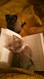 book and kitten
