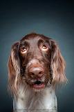 Sweet faced dog