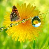 ~Nature Divine~