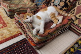 Rug cat
